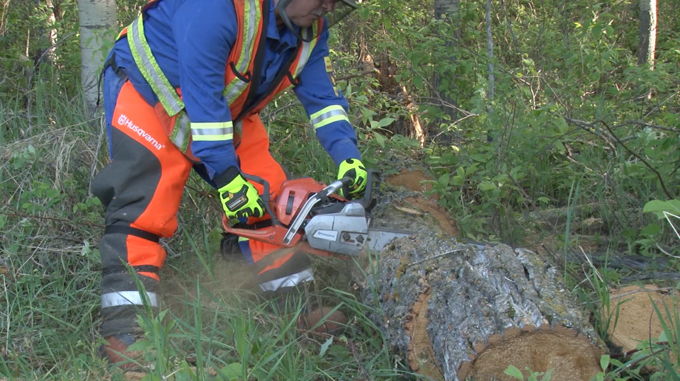 Chainsaw Safety (OSHA) Online Course